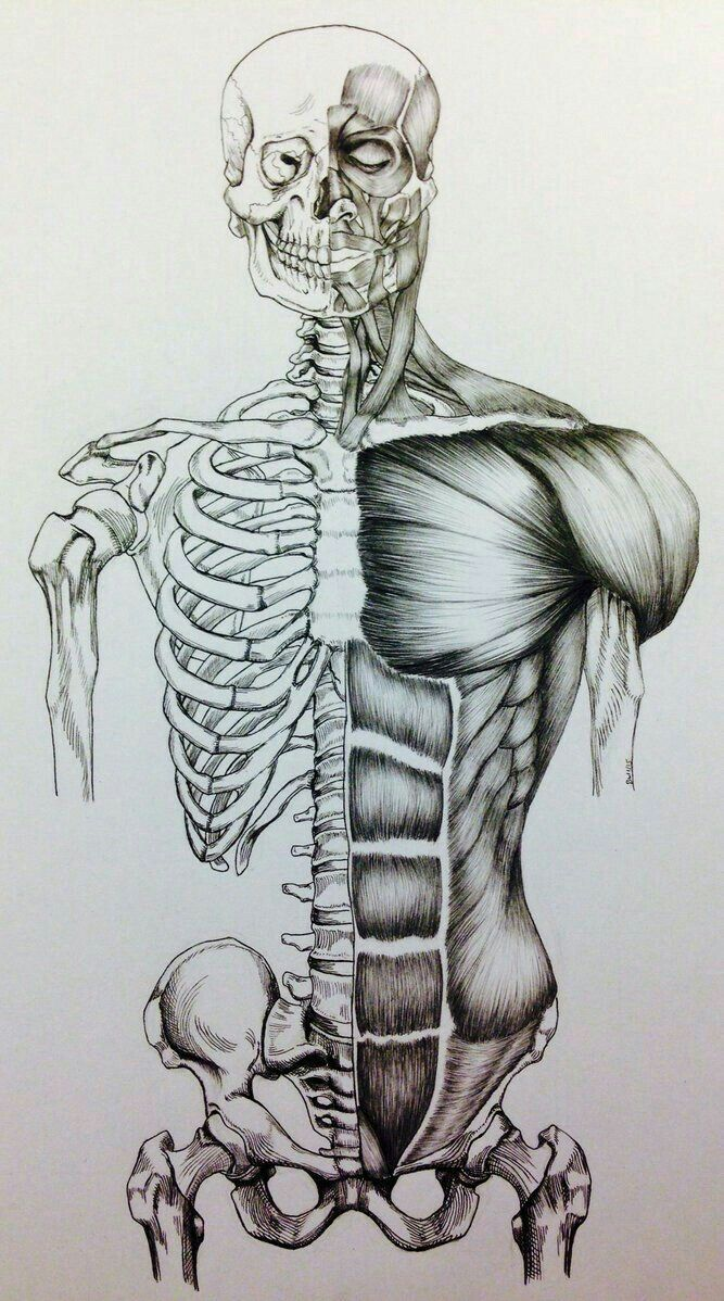 Pin de EG CREATION en Art | Pinterest | Anatomía, Anatomia dibujo y ...