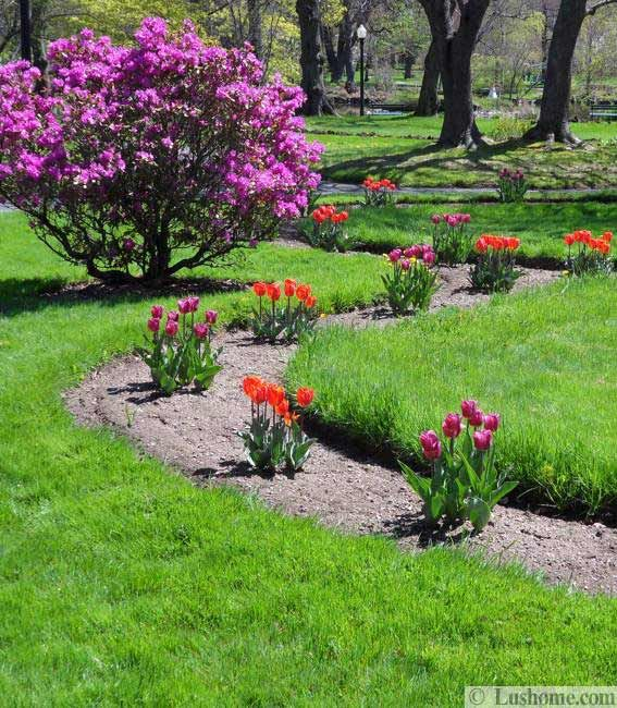 20 Winter Garden Design Ideas: Spring Flowers And Yard Landscaping Ideas, 20 Tulip Bed