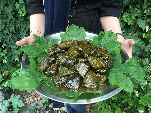 New blog post and recipe stuffed grape leaves dolmeh persian new blog post and recipe stuffed grape leaves dolmeh persian food forumfinder Image collections