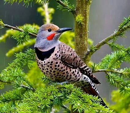 Uccello esotico