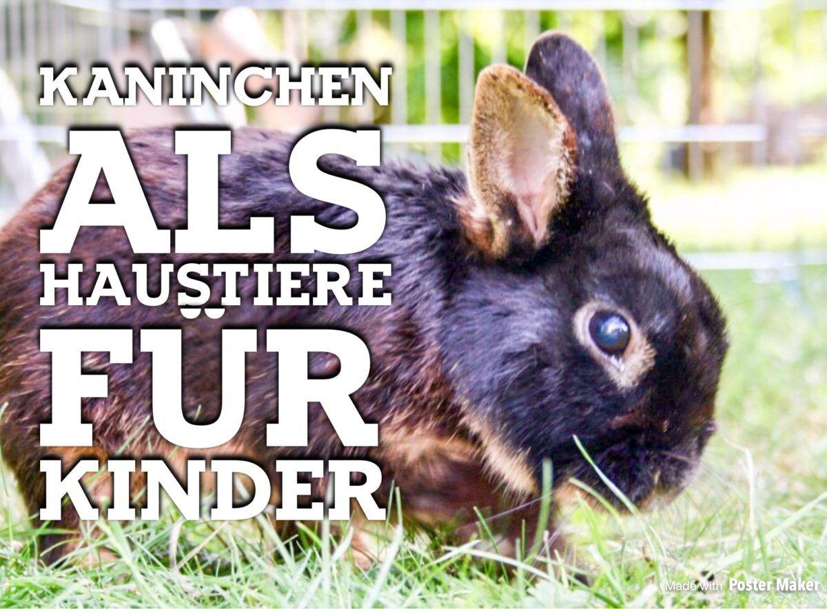 Kaninchen als Haustiere für Kinder? Haustiere für kinder