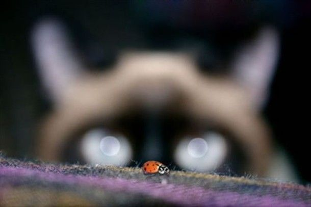 Meow and the Lady Bug!