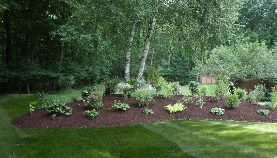 birch tree landscape designs   Landscaping With White Birch Trees