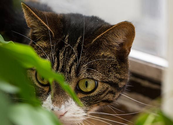 Why Do Cats Eat Bugs Can Bugs Make Cats Sick Petmd Over Time Cats Have Lost The Ability To Process Carbohydrates That Come F Cats Pets Cats Pet Vet