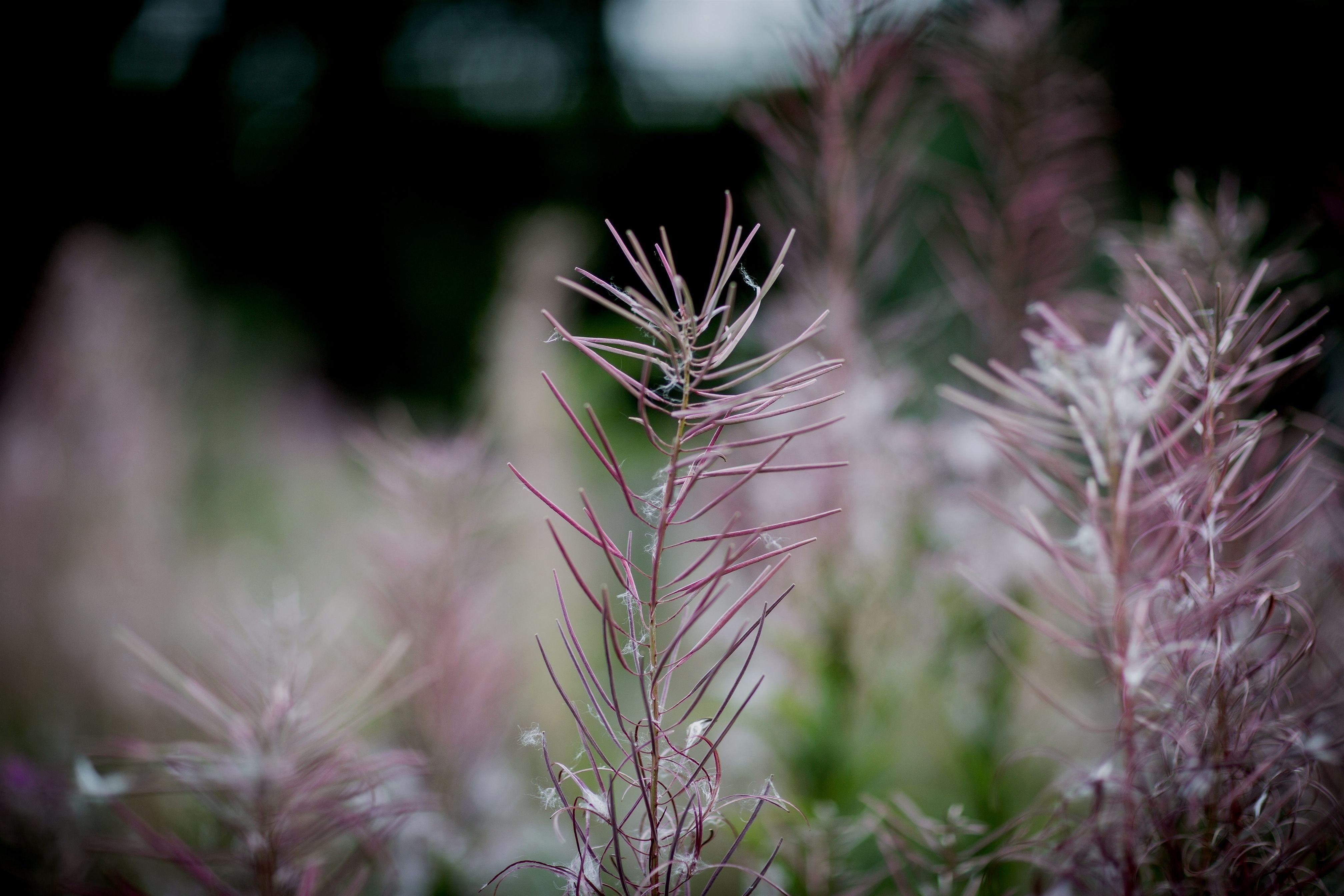 Pin On Gardening Path