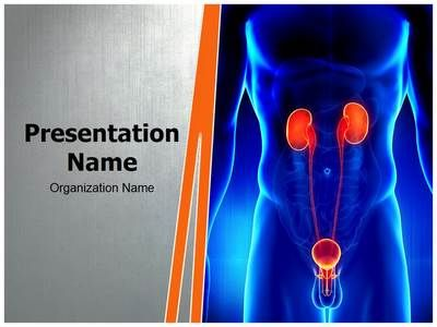 Check Out Our Professionally Designed Male Kidney Urogenital