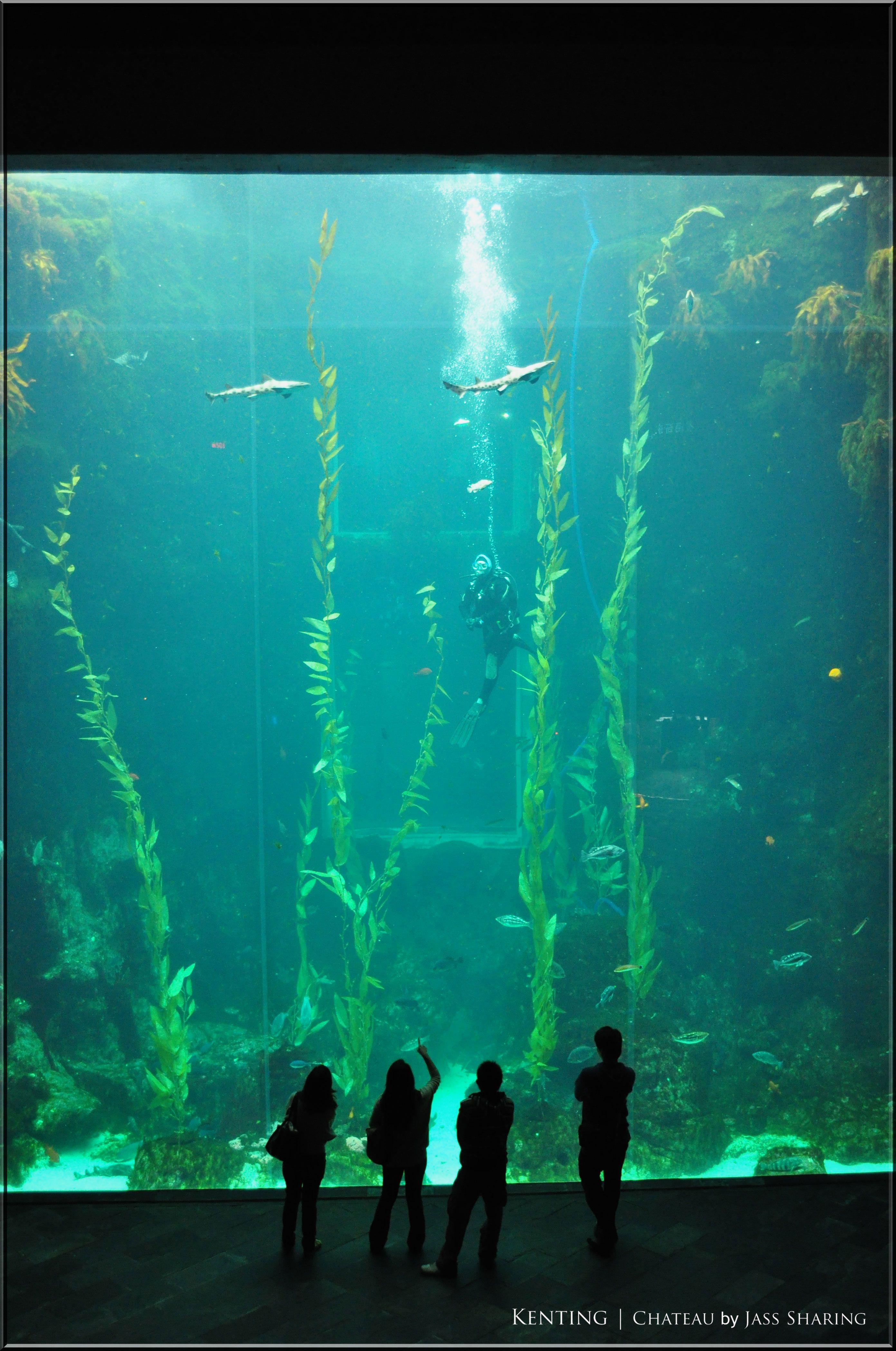Kenting Marine Biology Aquarium Biggest Aquarium In Asia Some Day