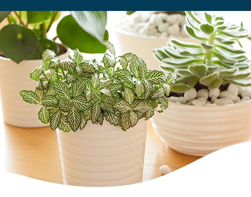 15 NonToxic Houseplants That Are Safe for Kids & Pets