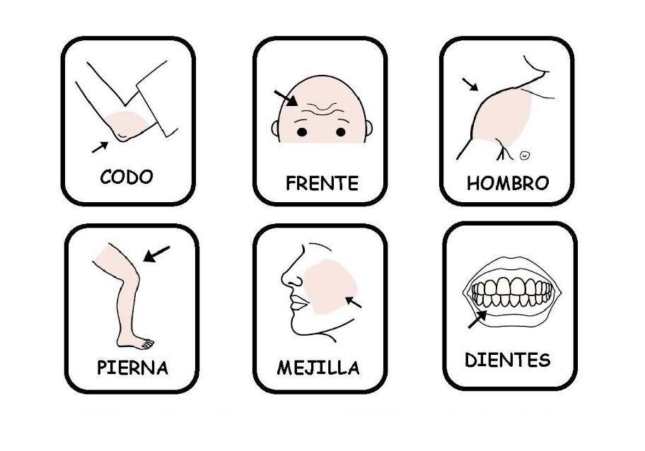 Las partes del cuerpo | Proyecto cuerpo médicos | Pinterest | Partes ...