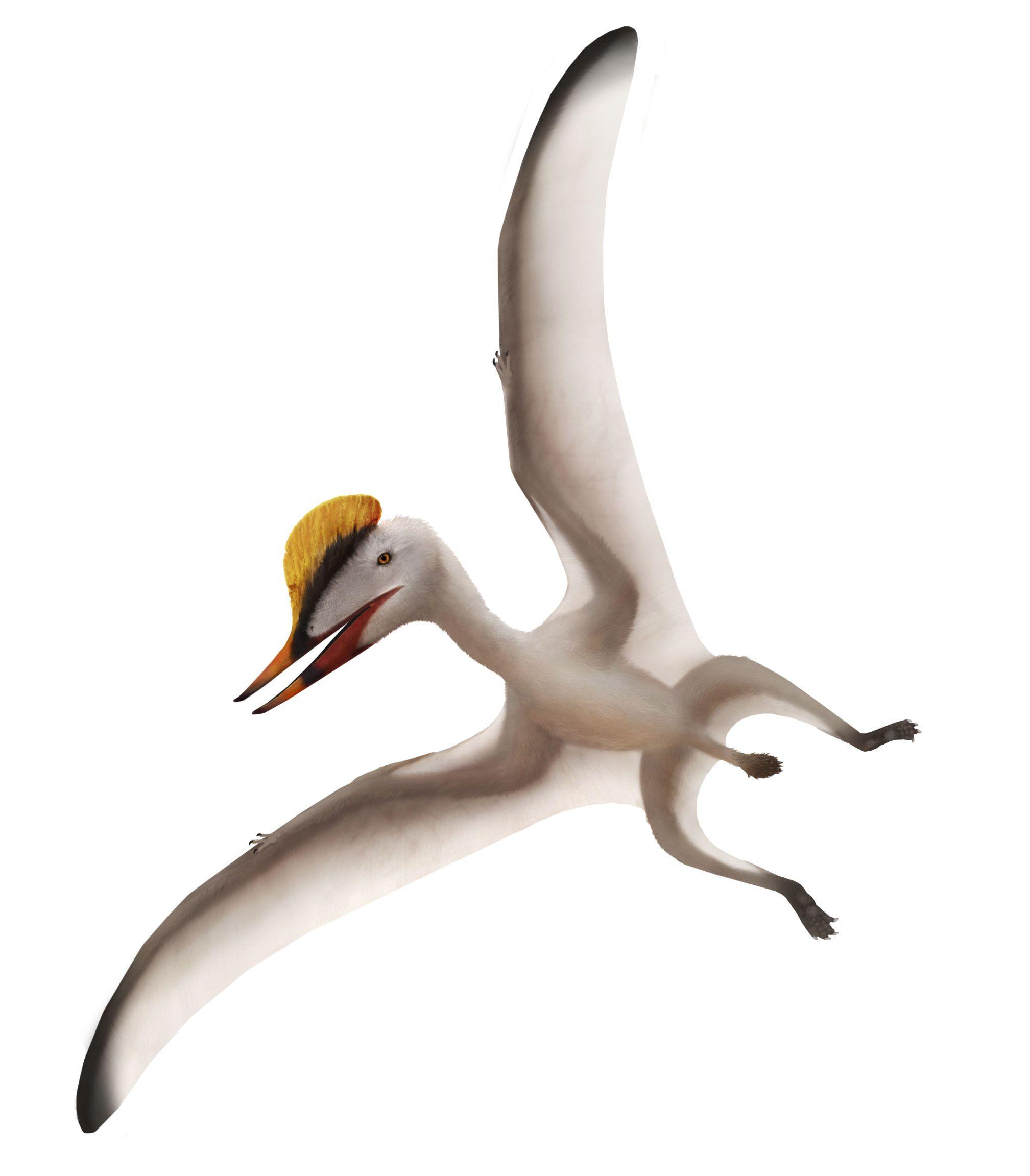 Germanodactylus Pteros Prehistoric animals