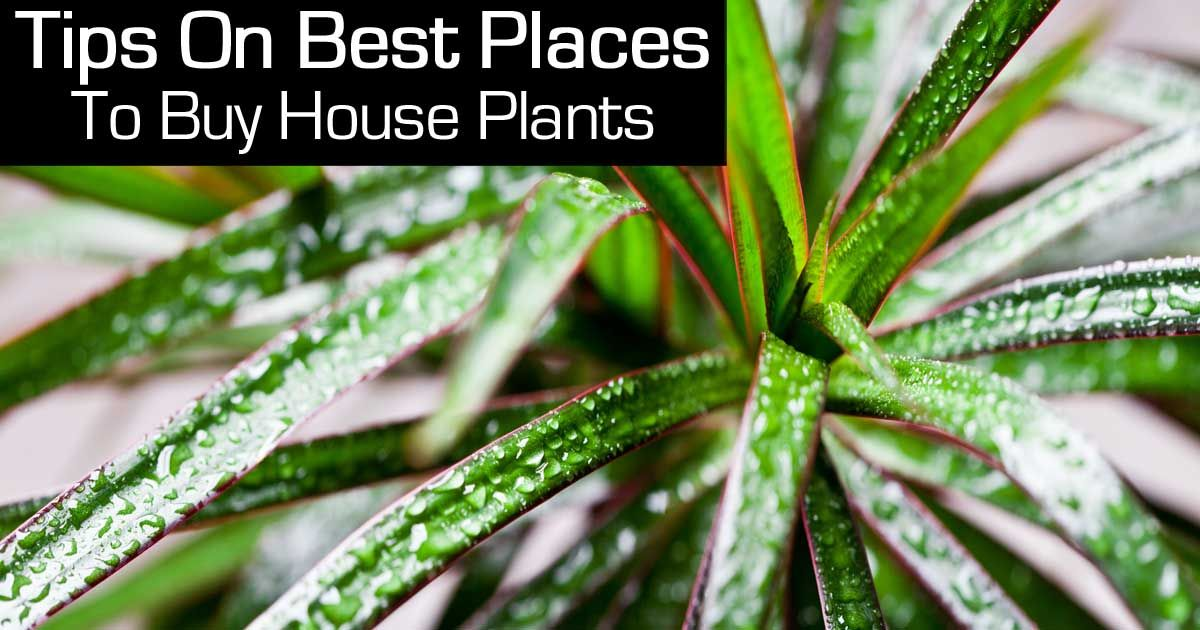 Where To Buy House Plants Tips On What To Look For! Buy