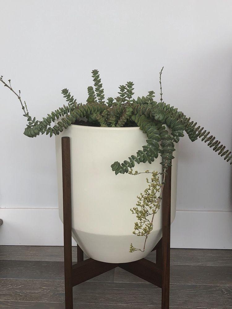 Photo Of Artemisia Nursery Los Angeles Ca United States String Ons
