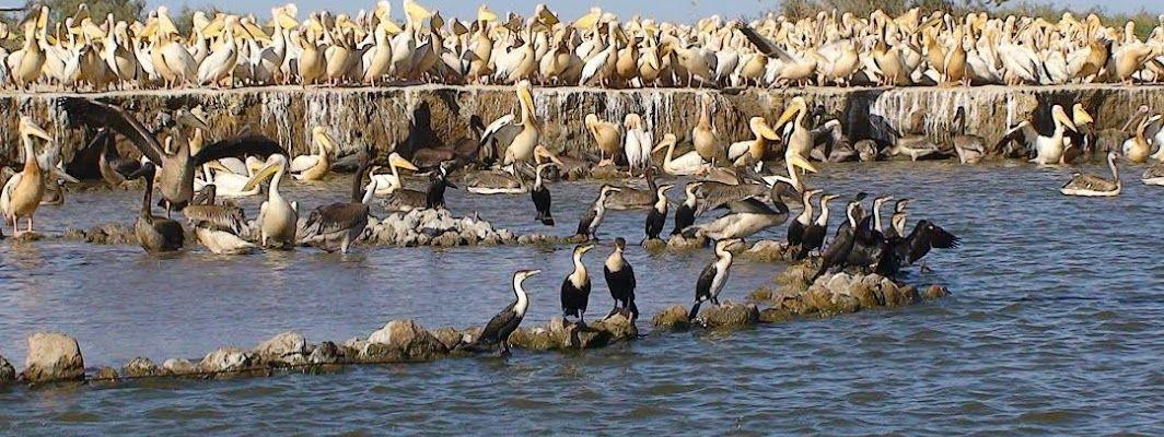 Santuario nazionale degli uccelli di Djoudj