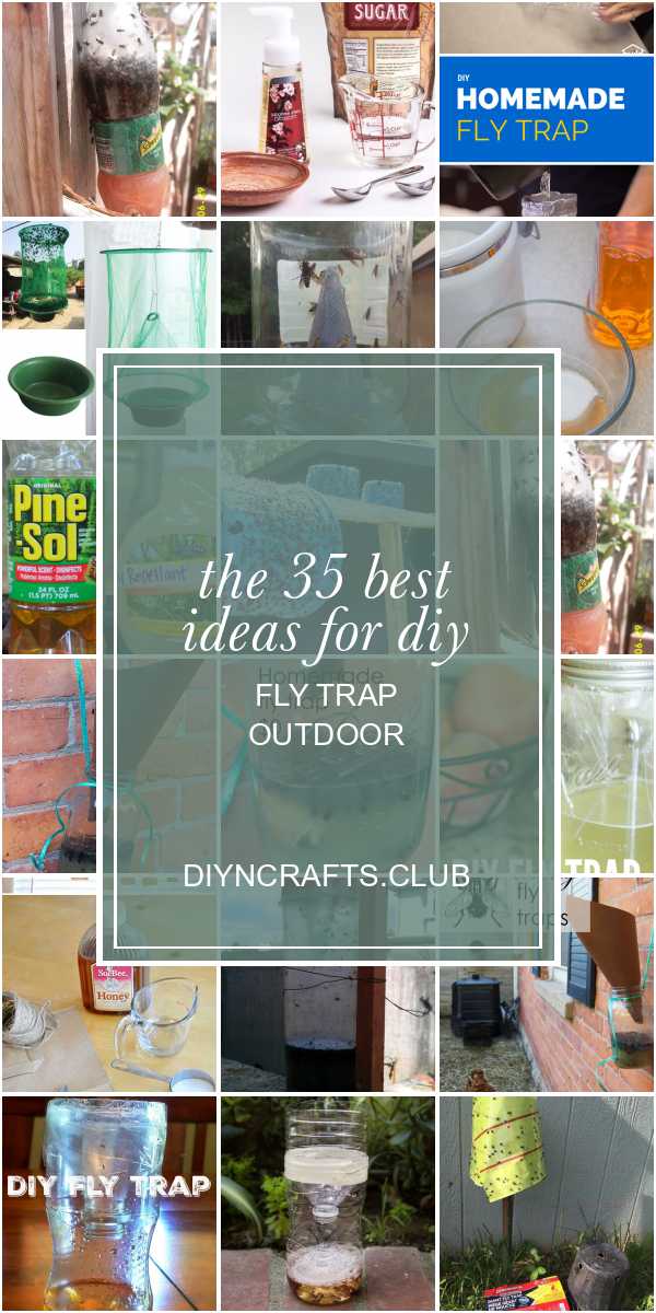 The 35 Best Ideas For Diy Fly Trap Outdoor In 2020 Diy Fly Trap Fly Traps Honey Diy