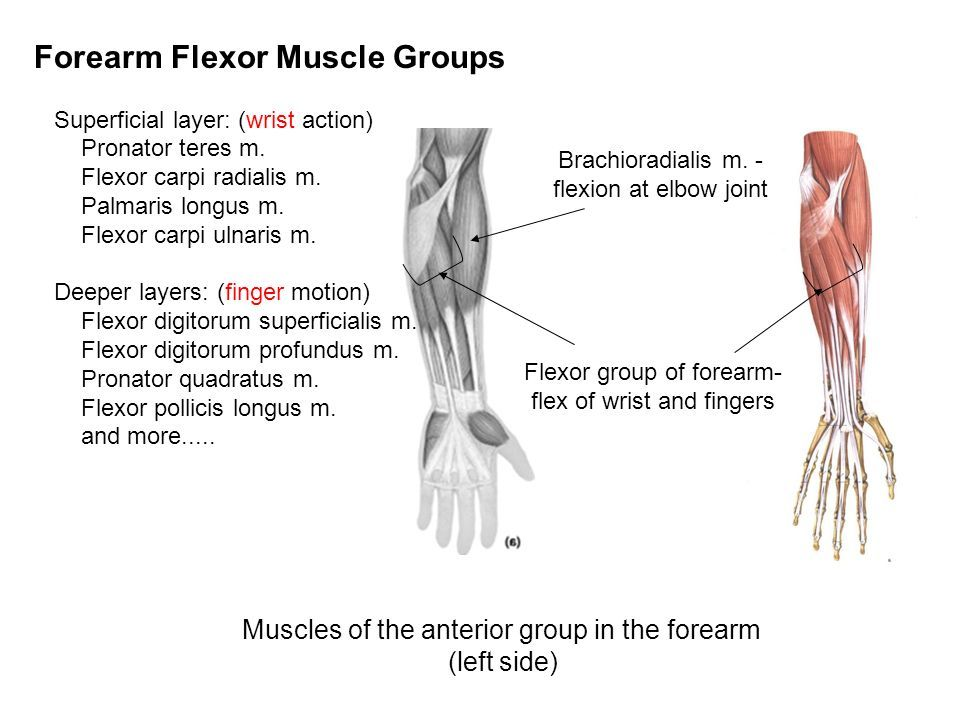 Anps Anatomy Physiology Joints Muscles And Movement Iii Ppt