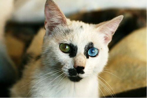 That's one gorgeous, unique cat