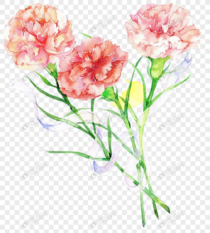 Carnation Carnations Mother S Day Flowers Plants Petals Flowers Carnations Pictures Carnations Web App Design Carnation Flower