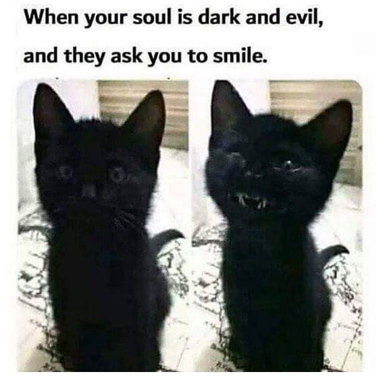 Goth Meme Black Cat Kitten Cute Funny Animals Funny Animal