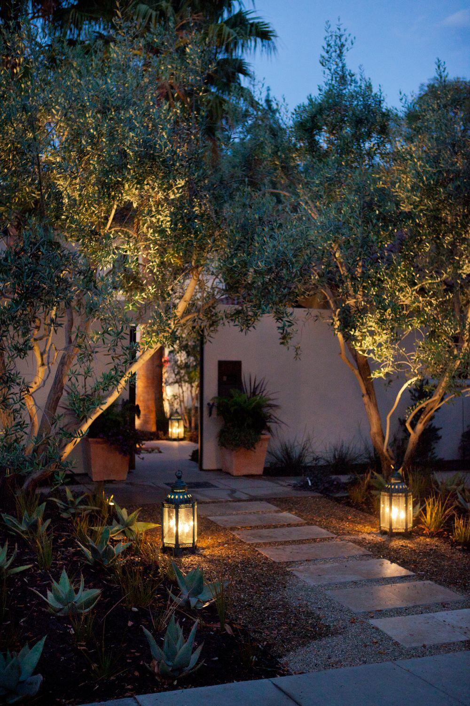 Villa Bougainvillea. Suggest to use mulch under olive