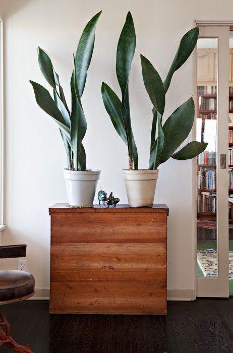 Leafy Indoor Plants Make The Best Living Statement Decor
