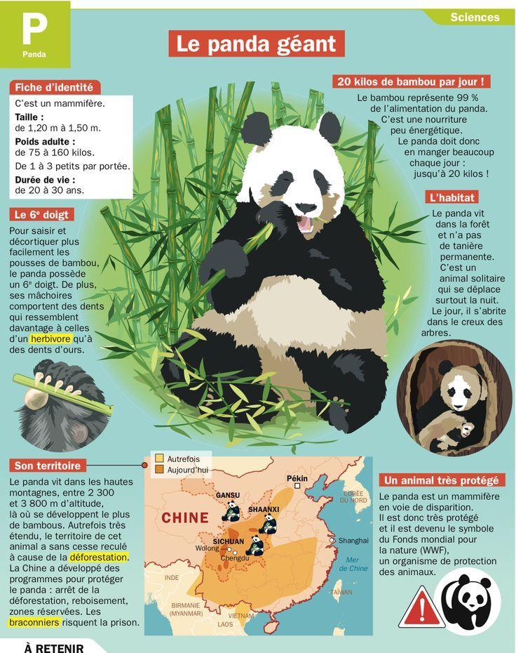 le panda geant fiches mon quotidien pinterest panda education et science. Black Bedroom Furniture Sets. Home Design Ideas