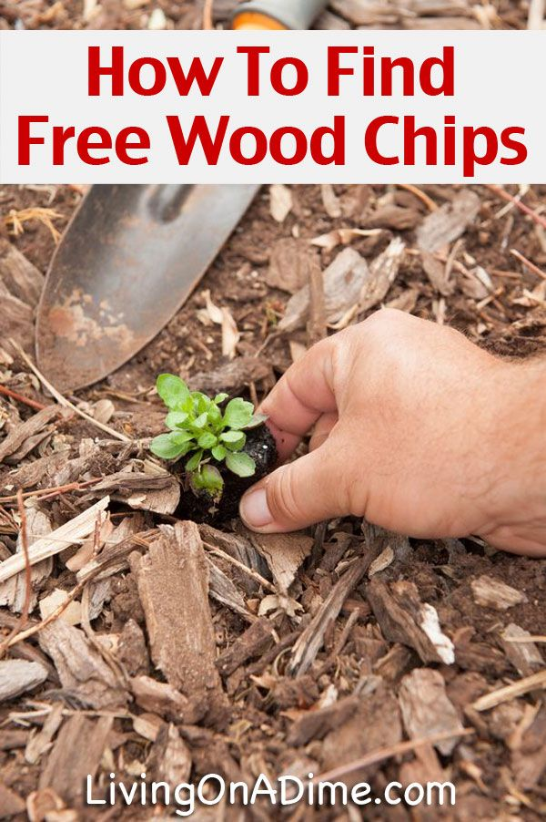 Free Wood Chips For Mulch   How To Save Money Making Gardening Easier!