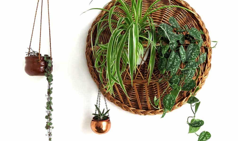 Where and How to Buy Indoor Plants is part of Buy indoor plants, Plants, Hanging plants diy, Hanging plants, Propagating plants, Plant cuttings - You want to have a beautiful, thriving plant  But where do you buy such houseplants, and how to choose the right one for your home