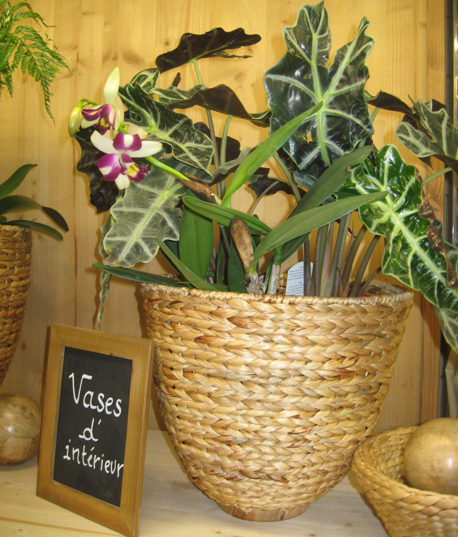 Alocasia and orchid by philippe de stefano indoor vegetal and