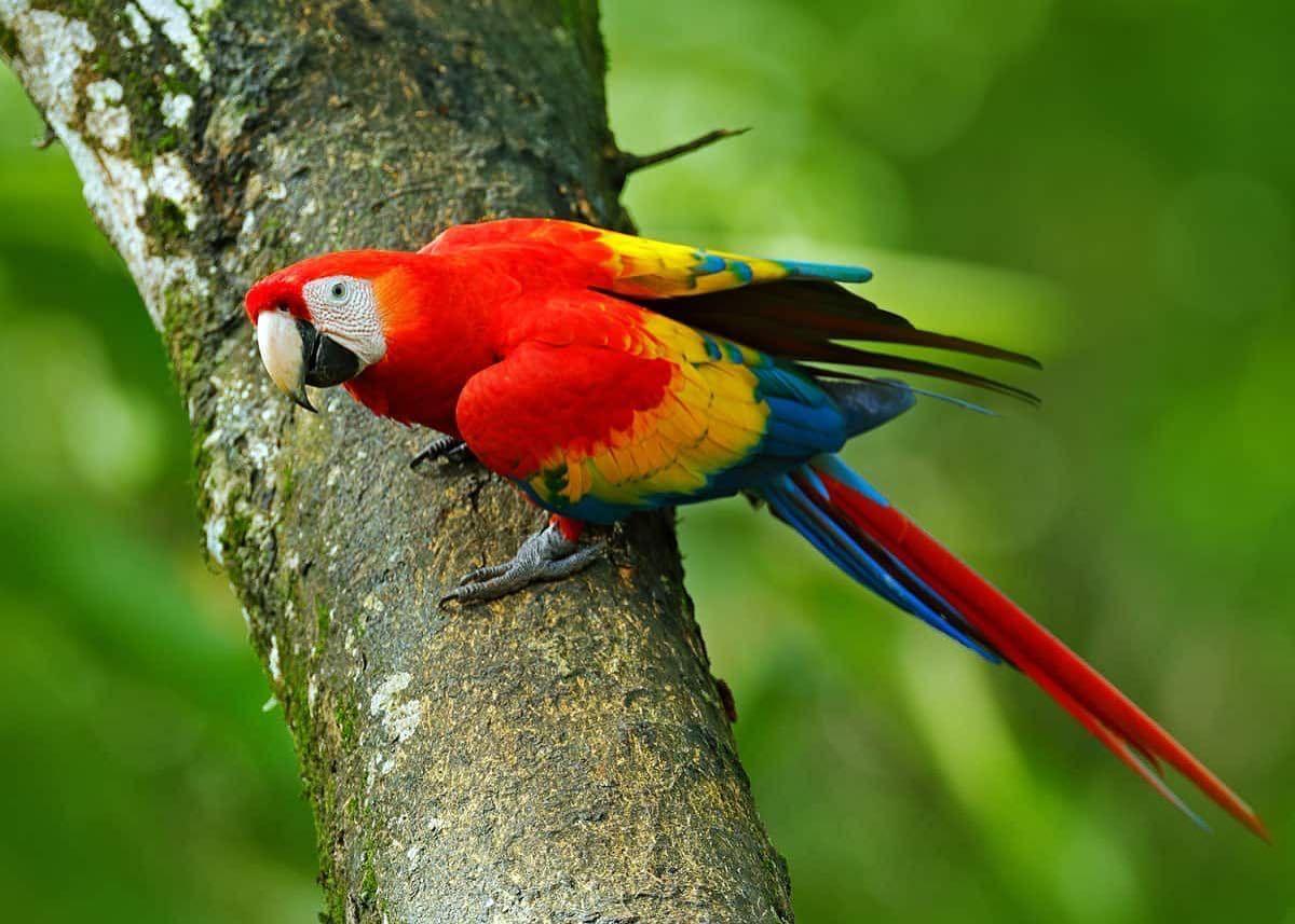 Native Animals In South America Rainforest