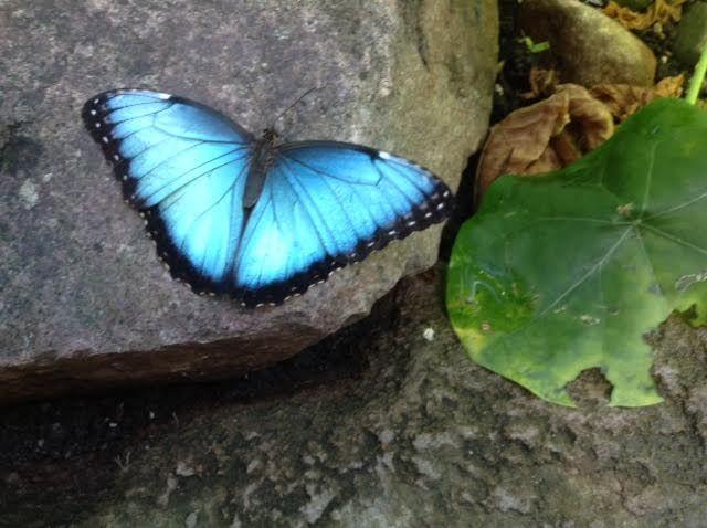Butterfly by AKissAtDusk.deviantart.com on @DeviantArt