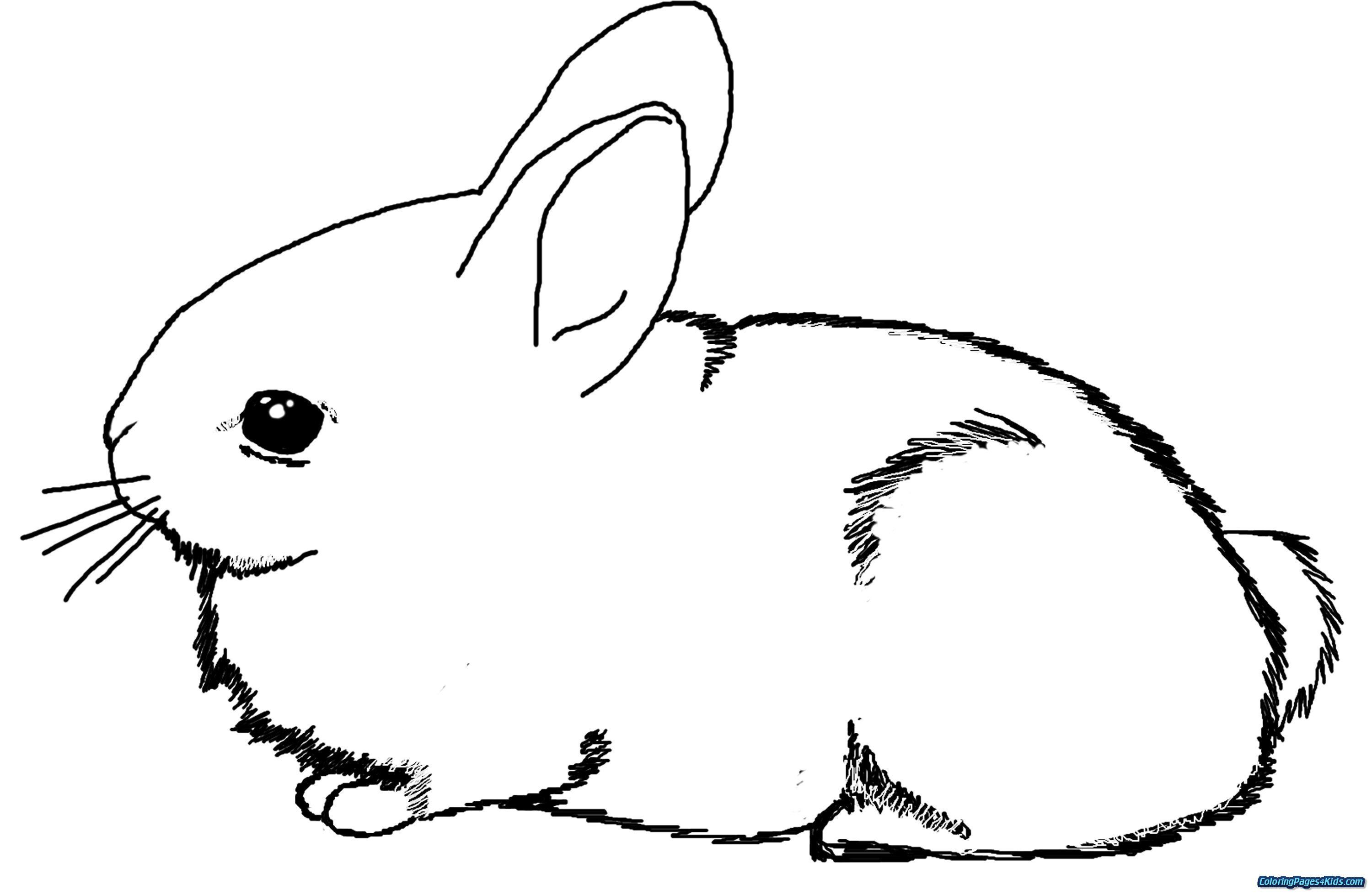 Peter Rabbit Coloring Pages New Peter Rabbit Coloring Pages Coloring Pages Patinsudouest Bunny Coloring Pages Dragon Coloring Page Cartoon Coloring Pages