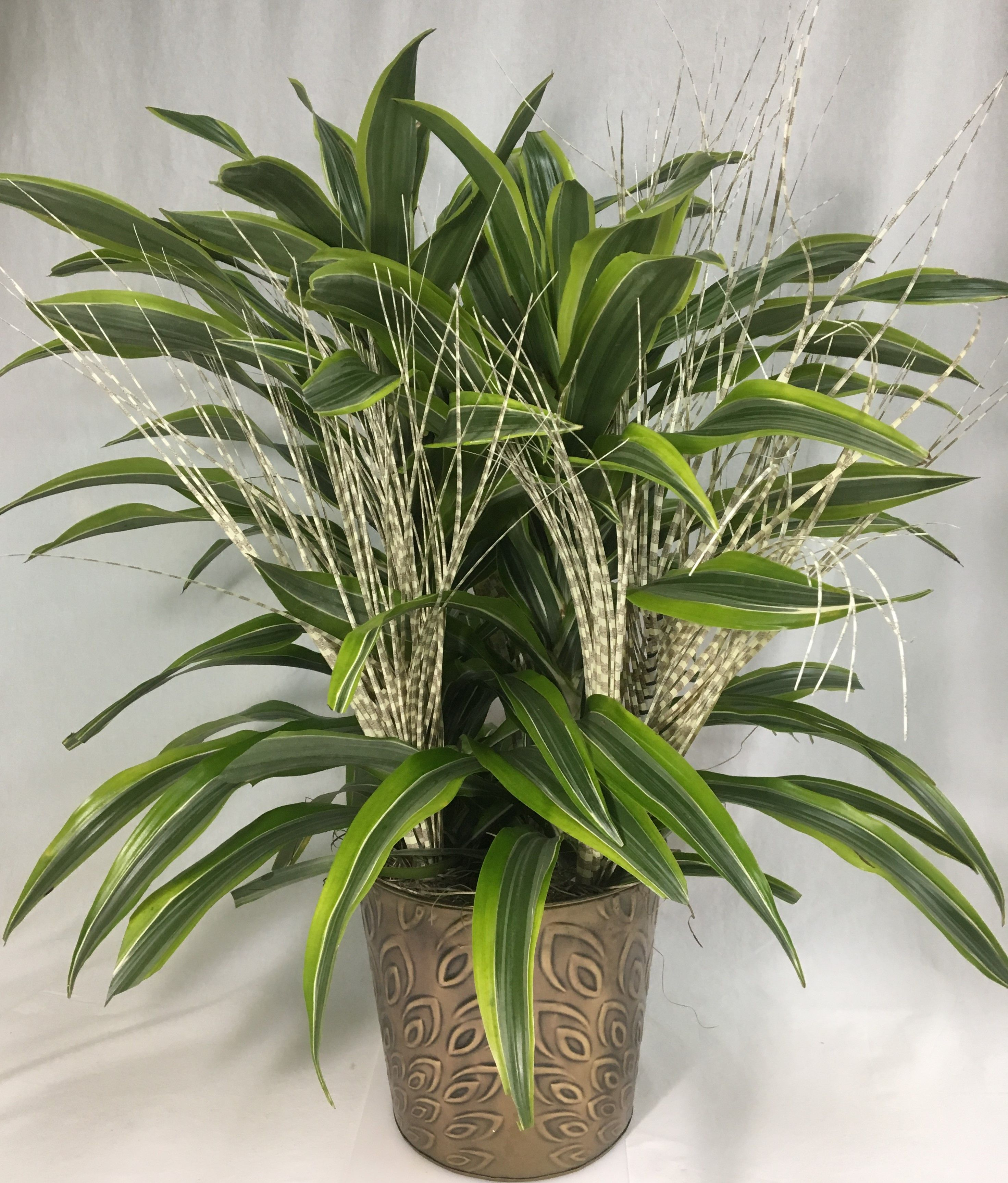 8 dracaena corn plant dressed with artificial zebra grass
