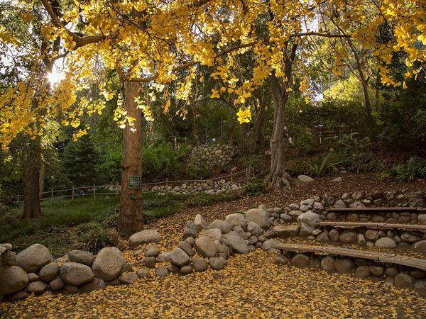 Mildred E. Mathias Botanical Garden, Los Angeles, CA   This Seven Acre