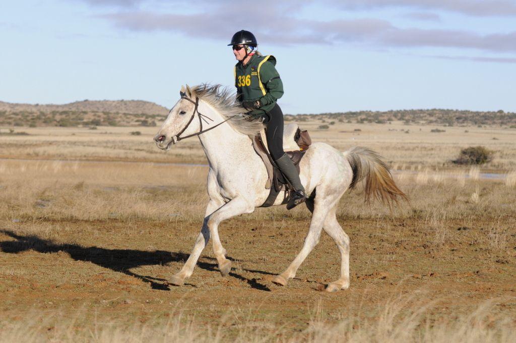 7 Characteristics of a Great Endurance Horse September