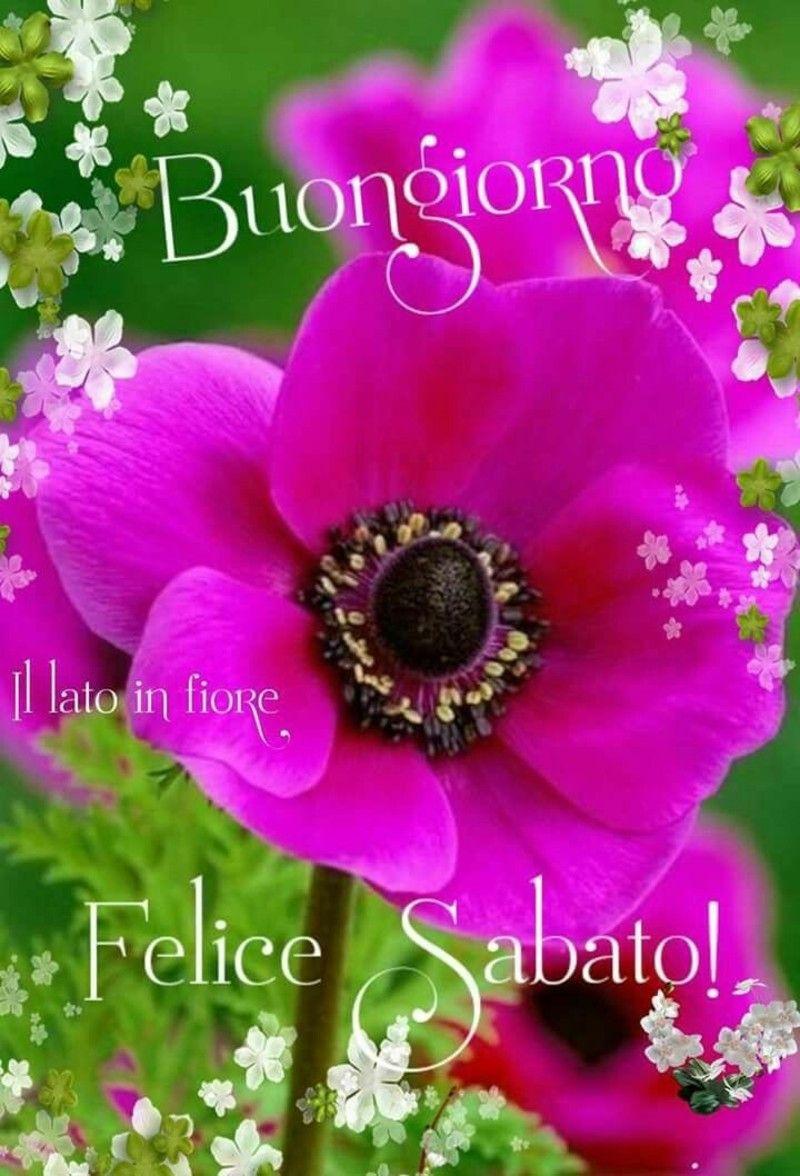 Buon sabato immagini con i fiori 2 saludos good for Buon sabato divertente immagini