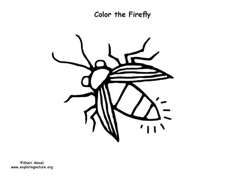 Firefly Coloring Page With Images Coloring Pages Firefly Color