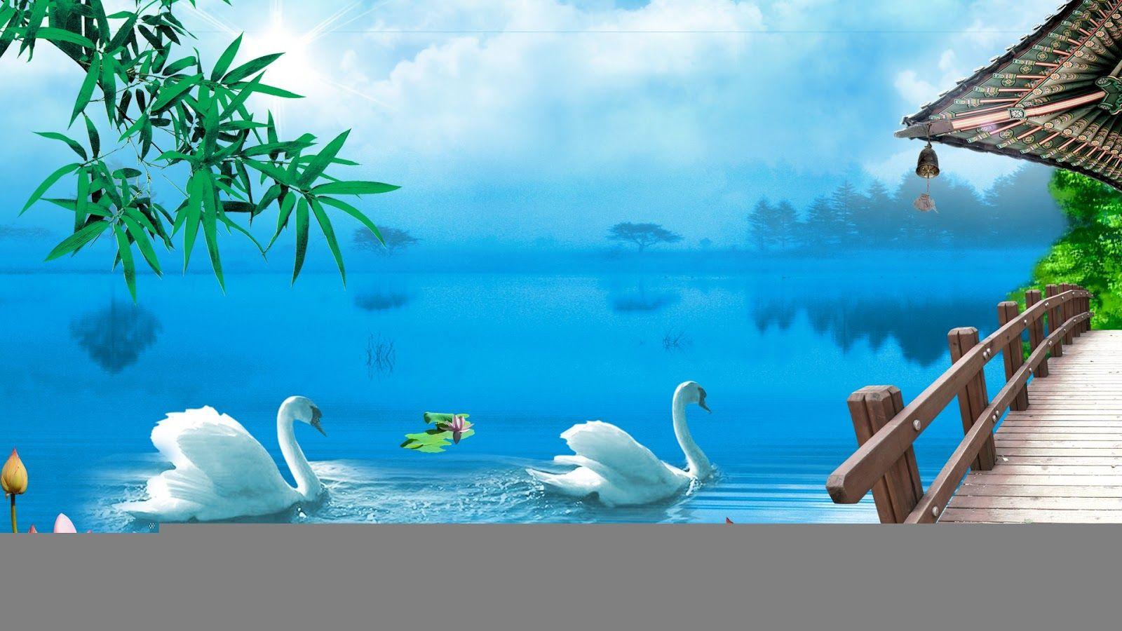 Swan Wallpapers Wallpaper