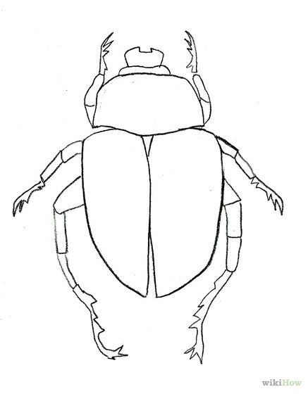 Line Drawing Insects : Draw a scarab beetle beetles illustrations and paintings