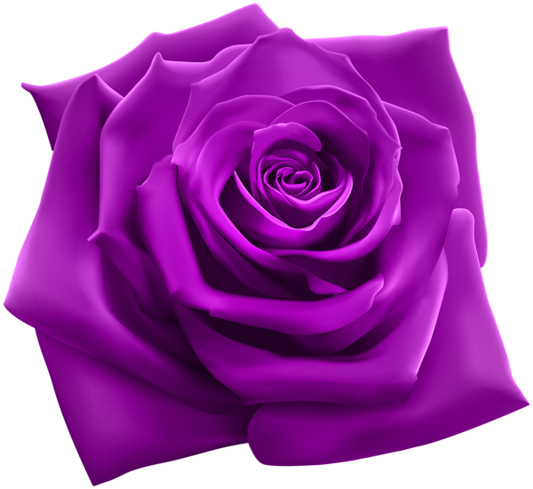 Purple Rose PNG Clipart Image | Roses | Pinterest ...