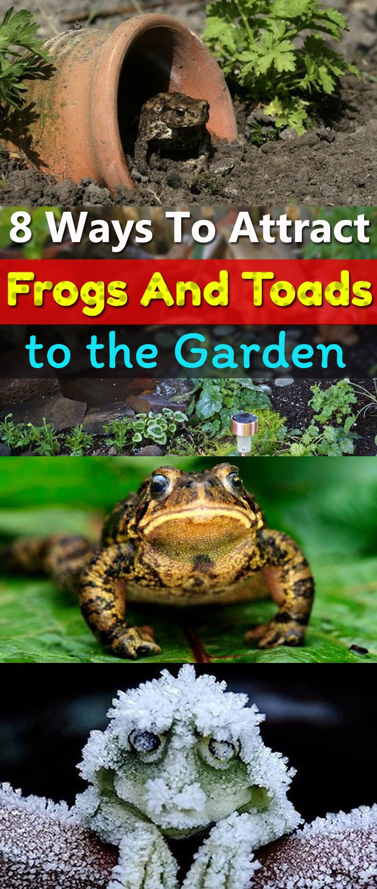 8 Ways To Attract Frogs And Toads In The Garden | Garden ...