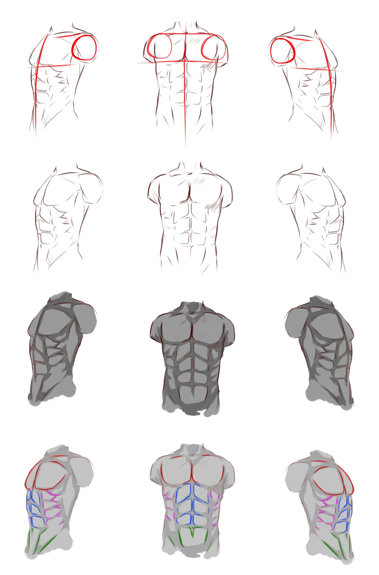 Male Anatomy By Rykyiantart On Deviantart Painting