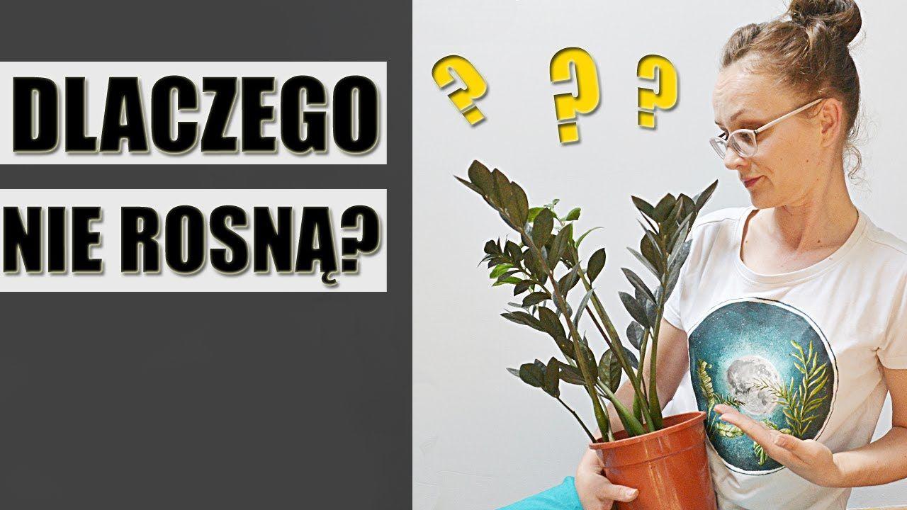 Dlaczego Doniczkowe Rosliny Domowe Nie Rosna In 2020 Indoor Plants Plants