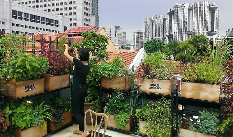 10 Tips To Start Your First Herb Garden In Singapore