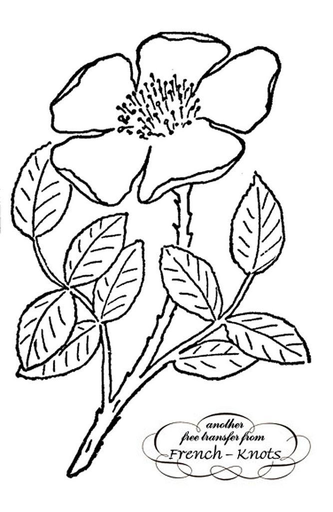 Pin de Adrianna en Pergaminowe wzory | Pinterest | Dibujo de flores ...