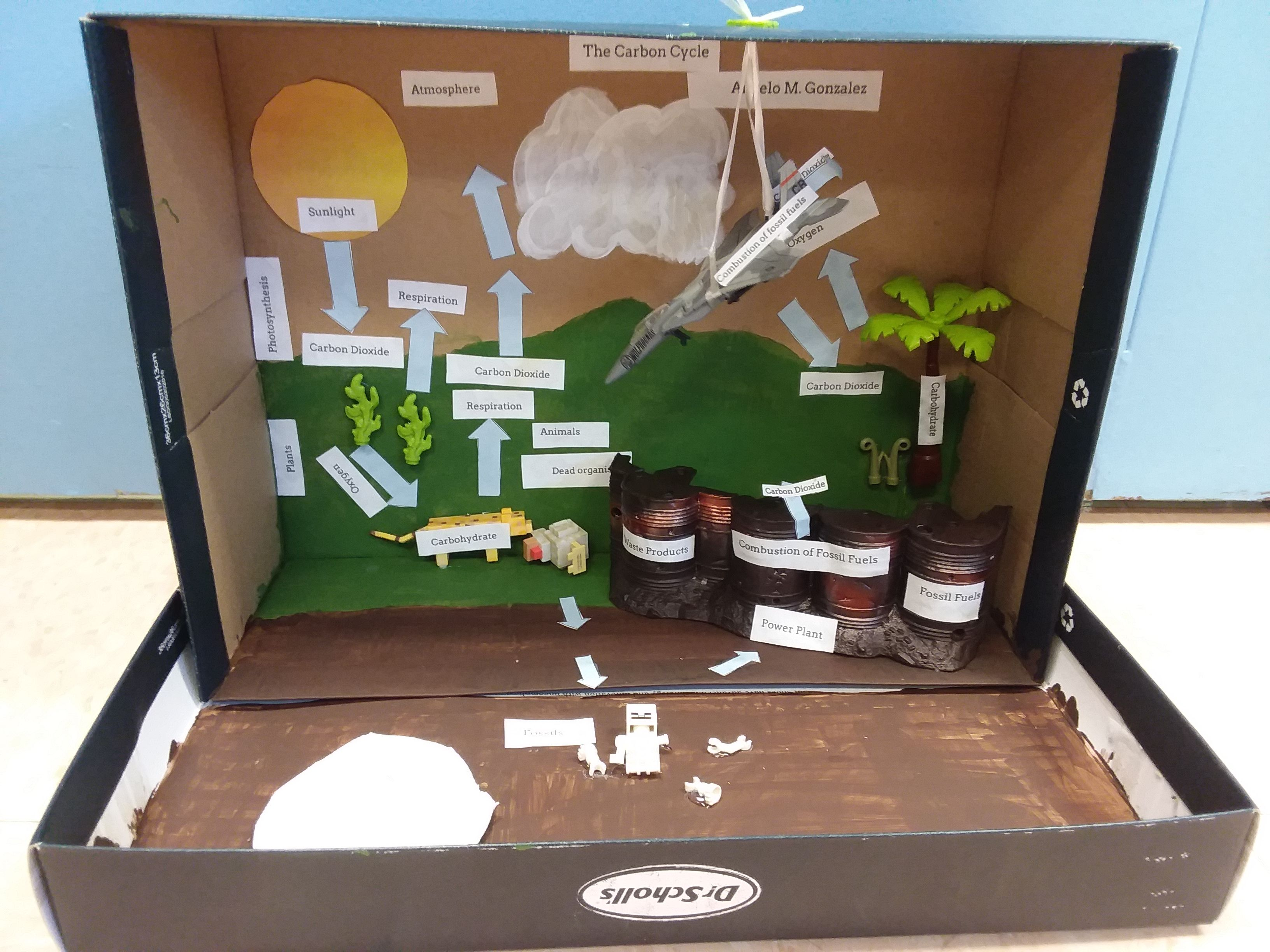 Ecosystem Project Photosynthesis Respiration Carbon