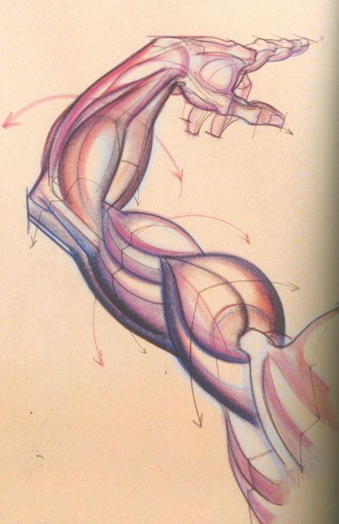 Artistic Anatomy | burne hogarth anatomy | Pinterest | Anatomía ...