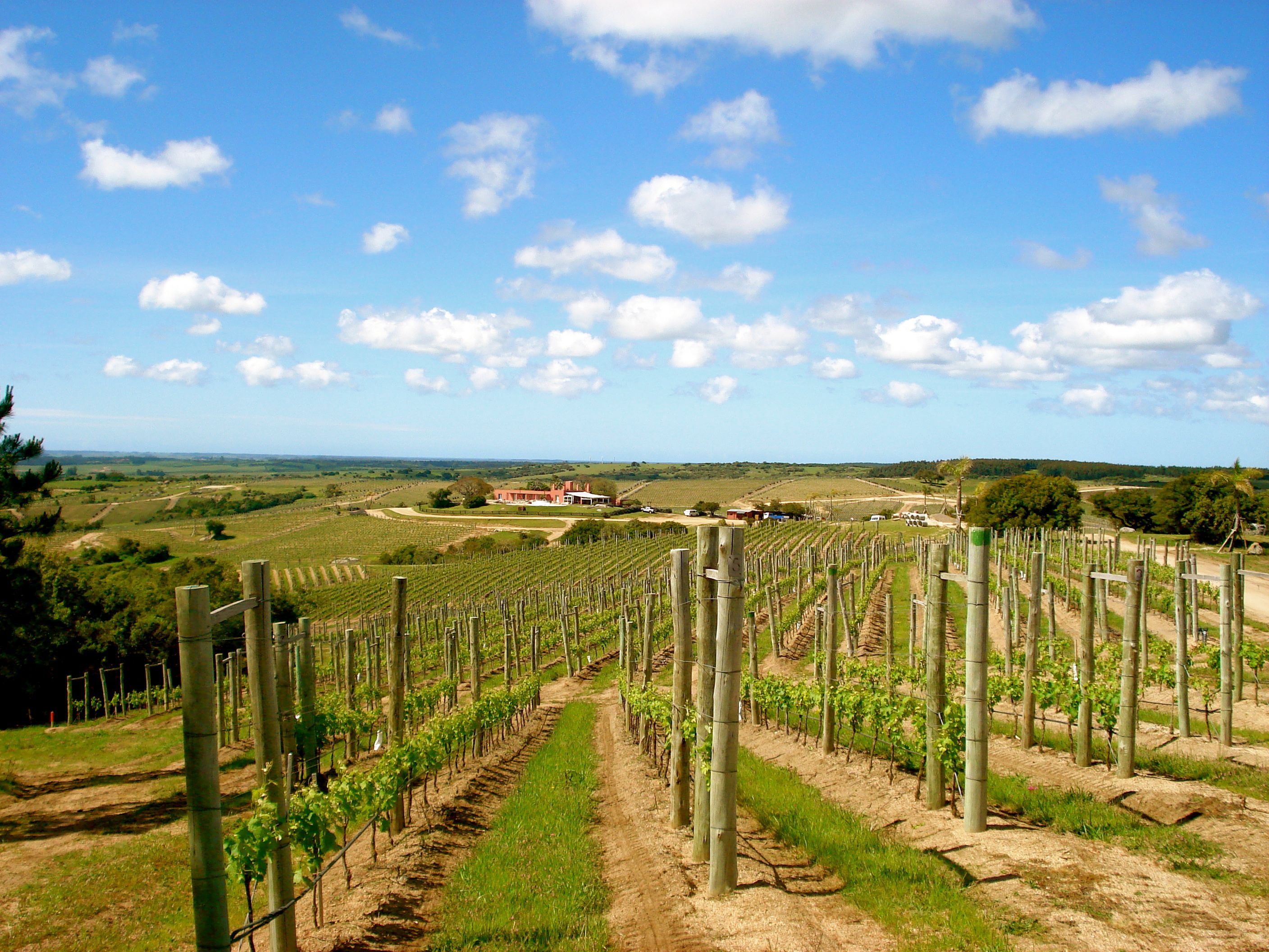 Guest Comments The Wine Experience Wine Region Vineyard Farmland