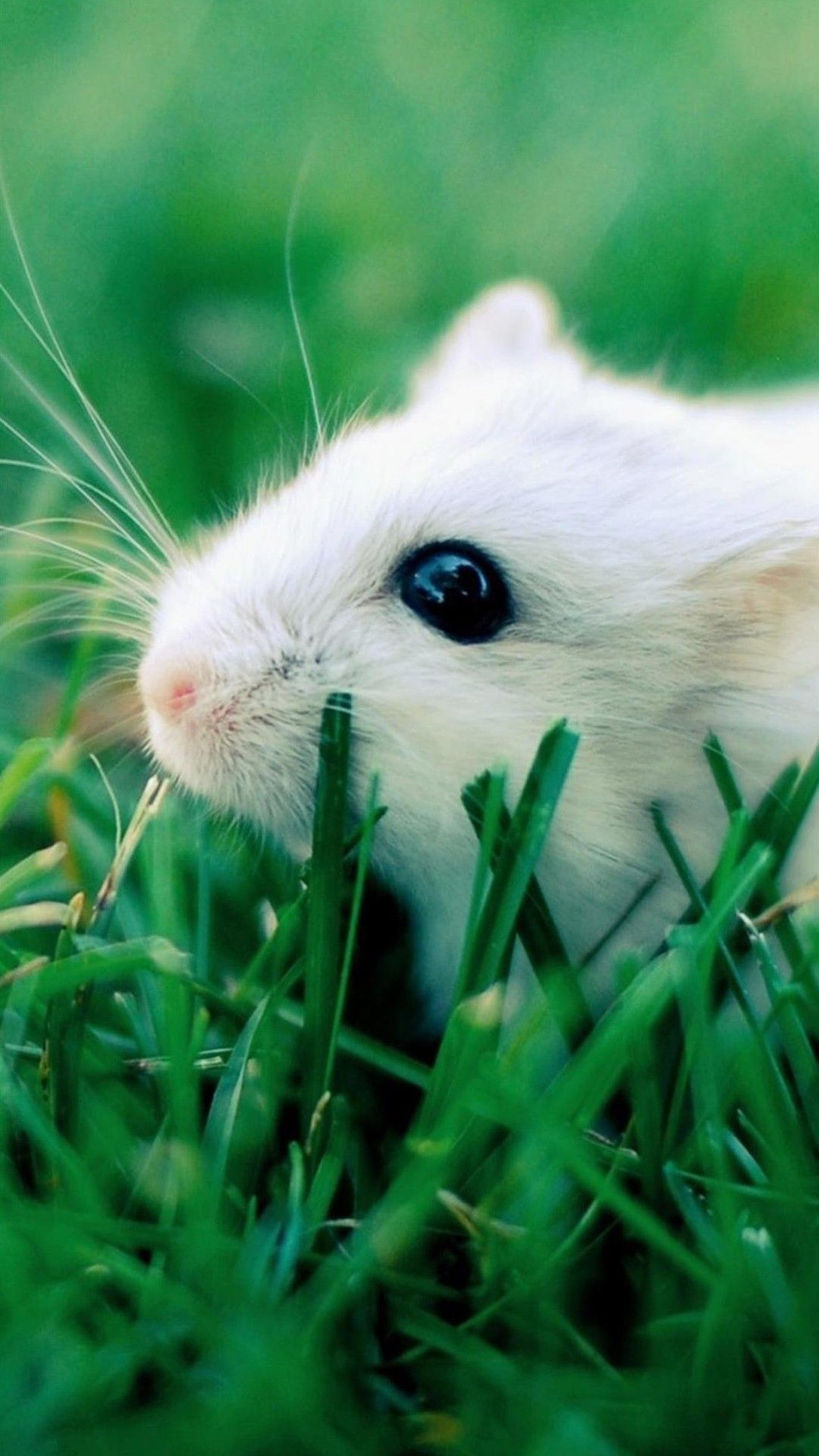 Pin By Therese Martin On Bokeh Cute Hamsters Hamster Wallpaper Hamster