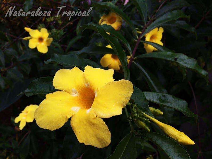 flor de mantequilla en campo에 대한 이미지 검색결과