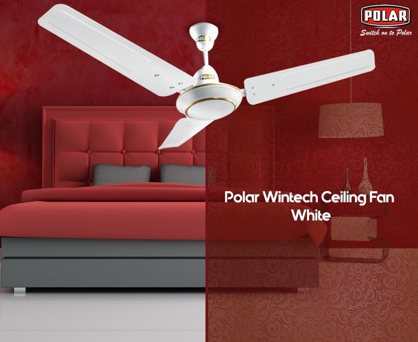 Polar Brings To You An Elegant Design Ceiling Fan At An Affordable